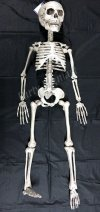 Hanging 30''Skeleton Halloween Party Decoration